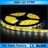 I migliori indicatori luminosi di striscia flessibili di prezzi SMD 5050 12V LED