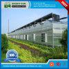 Casa verde da folha Cost-Effective do policarbonato para sistemas hidropónicos