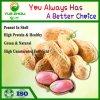 Fournisseur de longue série d'arachides Arachides naturelles dans le shell avec un bon prix