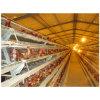 Equipamento automático da agricultura das aves domésticas da gaiola da camada da galinha da exploração avícola