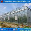 농업 상업적인 야채에 의하여 이용되는 유리제 온실