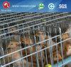As aves domésticas prendem/gaiolas de pássaro/gaiola da galinha