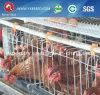 Jaula del pollo de la granja de la capa de Uganda