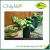 Onlylife 아름다운 좋은 디자인 및 니스 일 Ecofriendly 식물성 부대
