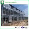 Serre dello strato di Polycarbonate/PC per gli ortaggi/fiori/frutta/agricolo