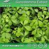 Выдержка 100% естественная 20%~98% Gypenosides Gynostemma