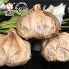 Guter Geschmack gegorener schwarzer Knoblauch 6 cm-Birnen (500g/bag)