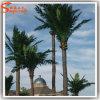 Palma artificiale decorativa esterna della noce di cocco di vetro di fibra