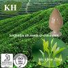Alto estratto naturale del tè verde; Polifenoli di 50%, 50% EGCG