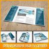 Conceptions de brochure témoin libre