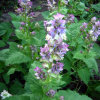 Salvia Sclare L/Sclareolide (CHROMATOGRAPHIE GAZEUSE 95%-98%)