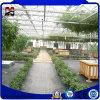 Venlo Agricultura tomate de estufa de vidro panorâmico múltiplos para venda
