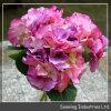 Nuevo diseño de alta calidad de Flores Artificiales Hydrangea (muelle).