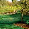 Jungfrau PET Ernte-olivgrünes Netz mit UVzusätzen (YHZ-HON04)