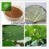 Extrait chaud de feuille de lotus de 2015 de vente de poids produits de perte