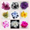 Feder-Blume (FT80010)