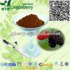 Pó natural do extrato do Mulberry da anticianina do extrato da fruta