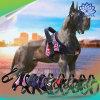 De regelbare Producten van het Huisdier van het Netwerk van de Band van het Vest van de Uitrusting van de Hond van Huisdieren Weerspiegelende In te ademen