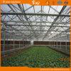 Planting Vegetables를 위한 튼튼한 Venlo Type 다중 Span Glass Green House