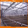 Type employé couramment Chambre verte de Venlo de feuille de polycarbonate