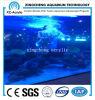Cella Cast Acrylic Sheet di Aquarium Project Price
