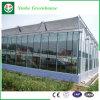 Agricoltura/serra di vetro commerciale con il sistema di ventilazione