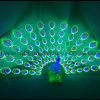 Decoração ao ar livre do feriado do pavão dinâmico do diodo emissor de luz da iluminação grande