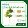 AntisepsisおよびAnti-Inflammation CentellaのAsiaticaエキス10%-95% Asiaticosideの粉