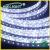 LED Flexible Strip Light di High Voltage AC220/110V SMD 3528 120LEDs