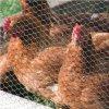 La rete fissa o il pollame del giardino mette in gabbia la rete metallica esagonale