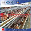 Cages chaudes en gros de couche de vente de ferme de poulet de la Chine Kenya