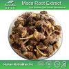 Выдержка корня 100% естественная Maca (4: 1~20: 1, macamide 45% 60%)