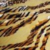 Il leopardo allinea il Burnout (0515)