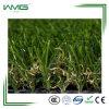 Fresh Little Green Grass for Decoration