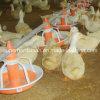 Alimentateurs et buveurs de volailles de haute qualité pour le canard