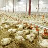 Оборудование цыплятины высокого качества полного комплекта автоматическое