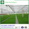 De Tuinbouw van Xinhe Grennhouse van Qingzhou