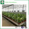 Alta transmitancia Venlo de efecto invernadero de cristal del techo para la Agricultura
