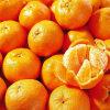 Vers Fruit, Vers Mandarijntje, Verse Ponkan