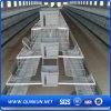Système de cage de poulet de qualité et de prix bas