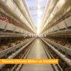 Cage automatique de poulet de couche de batterie pour le poulet/poule de couche/oeuf