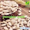 Семена тыквы кожи Shine китайца для сбывания с хорошим качеством