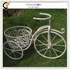 Basamento di fiore del metallo della bicicletta (PL08-5065)