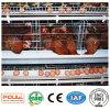 Het automatische Systeem van de Apparatuur van het Landbouwbedrijf van het Gevogelte van de Kooi van de Kip van de Laag