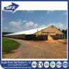 Landbouwbedrijf van de Kip van de Structuur van het staal het Prefab