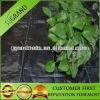 Estera tejida PP de Weed para la agricultura