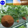 Chelato ferrico di chelatazione organico dell'amminoacido del fertilizzante