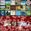 Interaktive Fußboden-Projektions-Software-PROversion