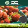 Il prodotto agricolo di fabbricazione del fertilizzante organico di Biochar fissa il prezzo di competitivo