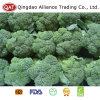 Hochwertiger frischer vollständiger Brokkoli